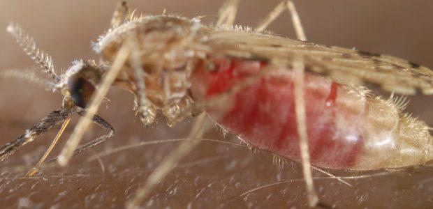 Malaria And Dengue Control 1